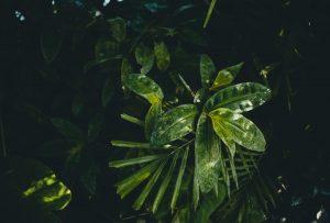 Guide: Derfor har regnskoven brug for din hjælp